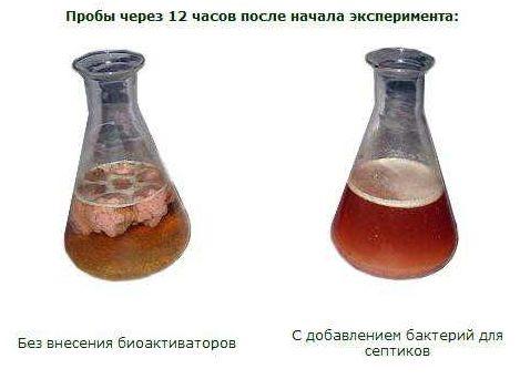 пробы с бактериями и без
