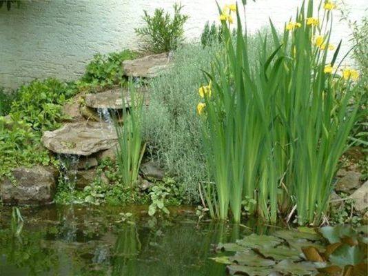 облагораживание пруда растениями